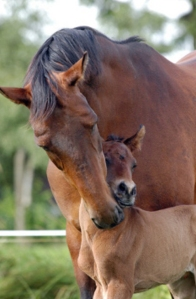 Mare-and-Foal