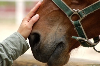 What-is-Equine-Massage1